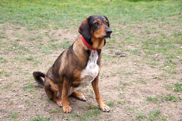 Auch Hündin Sina sucht noch ein Herrchen, dass sich hoffentlich beim Tierheimfest des Tierschutzvereins Bad Soden/Sulzbach findet. Foto: Tierschutzverein Bad Soden/Sulzbach